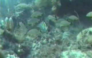Ocean Reefs